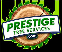 Tree Cutting Service Sutton